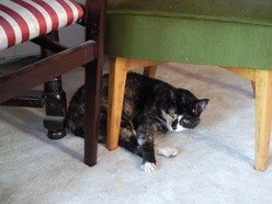 Cystitis in cats Grove Lodge Veterinary Group Sussex