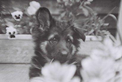 Dog breeding advice Grove Lodge Vets Sussex