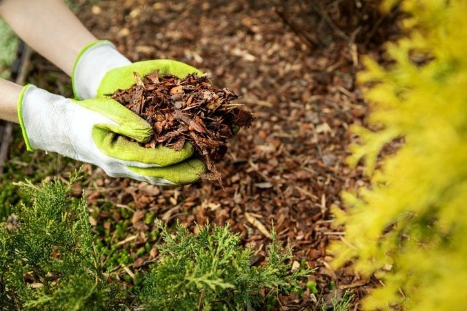 Hands holding mulch: mulch is important when it comes to keeping on top of your soil structure and improving it overtime.