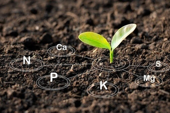 Soil health: understanding the NPK ratio and benefits of magnesium and calcium in soil structure.